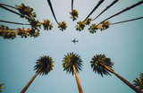 View of palm trees, sky and aircraft flying - 190771687