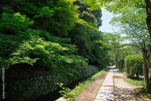 Fotobehang Kyoto 京都市 哲学の道