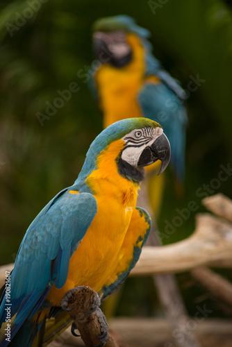 Fotobehang Papegaai Macaw at a Zoo