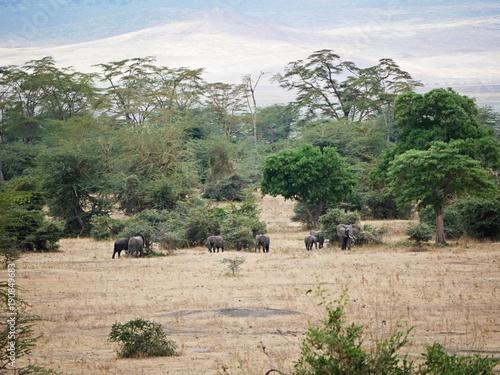 Staande foto Beige Trees in Africa, beautiful Africa landscape