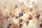Rose hip berries winter pattern - 190856084