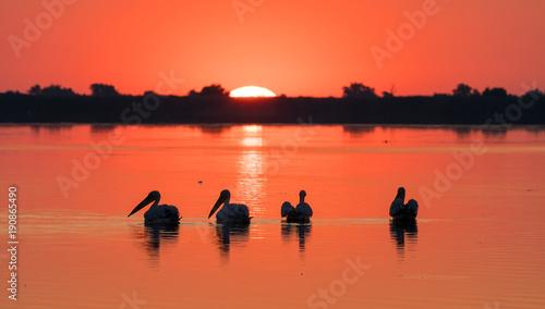 Staande foto Koraal Sunrise in Delta Dunarii (Danube Delta) and Pelican colony
