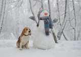 Beagle dog and snowm...