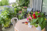 Balcony garden. Growing flowers on the balcony. Greening the balcony. Urban floriculture. Cultivation of flowers in pots. Container floriculture. Flowers on the balcony. Begonias on the balcony.  - 190885295