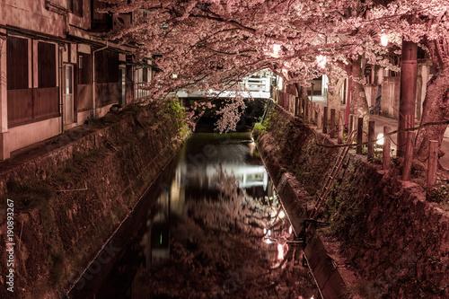 Fotobehang Diepbruine 夜桜