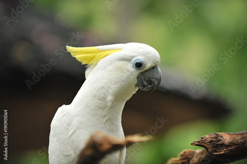 White parrot on a branch of the tree