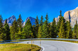 Quadro The road passes in the coniferous forests
