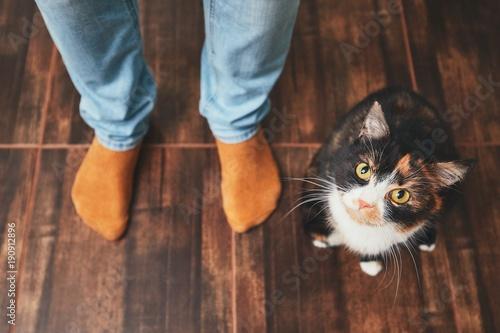 Fototapeta Man and cute cat
