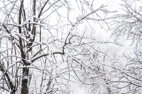 Winter in Moscow. Snow covered trees in the city. The view from the window during a heavy snowfall