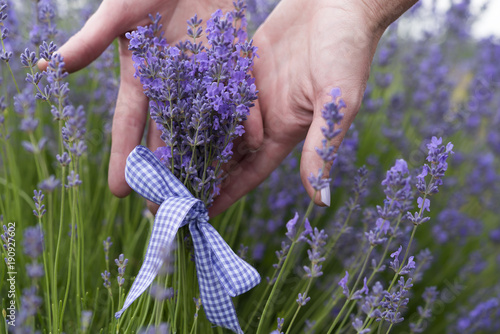 Fotobehang Lavendel Bouquet of lavender tied with ribbon in the hands of o girl