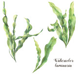Watercolor laminaria set. Hand painted underwater floral illustration with algae leaves branch isolated on white background. For design, fabric or print - 190937065