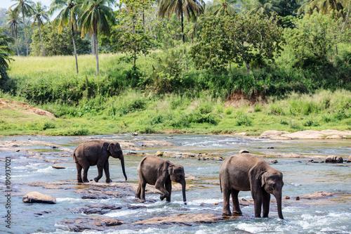 Deurstickers Natuur Wild elephants in Sri Lanka