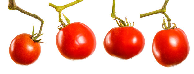 ripe red tomatoes on a branch. Isolated on white background set, collection