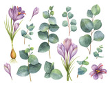 Watercolor vector hand painted set with eucalyptus leaves and purple flowers of saffron. - 190982245