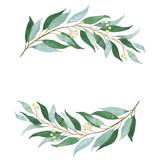 Wedding green twig. Watercolor illustration.