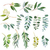 Wedding greenery twigs. Watercolor illustrations - 190988014