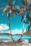 Two palm trees on the beach on a tropical island - 191000243