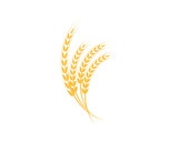 Agriculture wheat Logo Template - 191006862