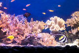 Tropical fish with corals and algae in blue water. Beautiful background of the underwater world. - 191011297