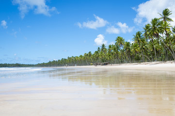 Scenic view of a remote Brazilian beach with palm trees on the shore in Bahia, Brazil