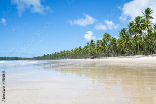 Foto Murales Scenic view of a remote Brazilian beach with  palm trees on the shore in Bahia, Brazil