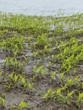 flood 2013 - 191022257