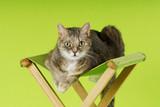 Hauskatze liegt auf einem Hocker