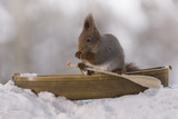 Red squirrel  in rowing boat holding an oar - 191041881