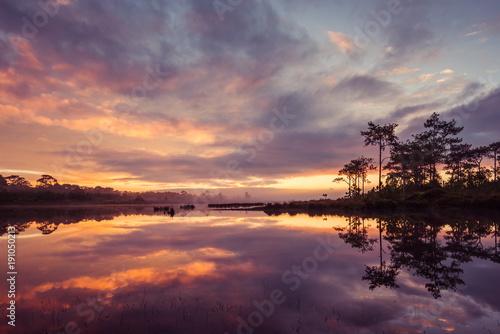 Fotobehang Thailand Fog rises over Marsh Lake at sunrise in Pine forest