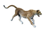 3D Rendering Big Cat Cheetah on White - 191052229