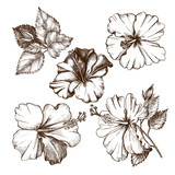 Ink hand drawn set of tropical hibiscus flowers. Botanical elements collection for design, Vector illustration. - 191052457