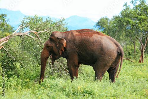 Amazing elephants walking around the nature.