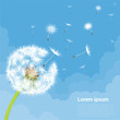 Dandelion seeds blowing away on the wind