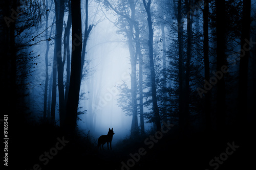 wolf-silhouette-in-dark-fantasy-forest