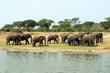 Quadro Wilde Elefanten in Afrika Uganda
