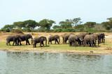 Wilde Elefanten in Afrika Uganda