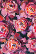 Red violet flowers rose peony close-up oil painting. Abstract hand painted flower background for design wedding invitations, save date cards, fabric, wallpaper, scrapbook