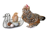 chick, chicken and eggs - 191076405