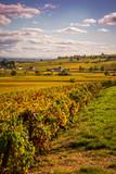 coteaux de Bourgogne - 191077223