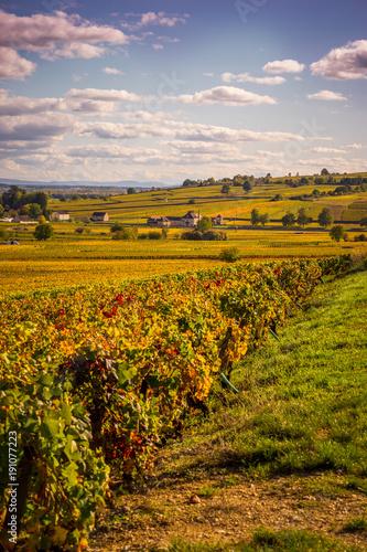 coteaux de Bourgogne