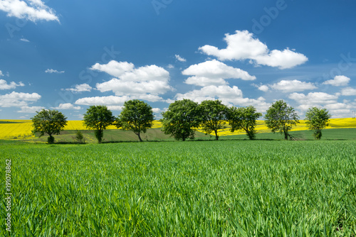 Field and sky. Agricultural landscape in the summer time