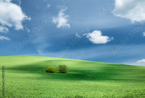 Fotobehang Lente Field and sky. Agricultural landscape in the summer time