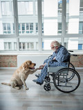 Tranquil senior man looking at the hound and holding the paw of it. Hound is sitting near the chair. Serene man is sitting in wheelchair and eyeglasses - 191079891
