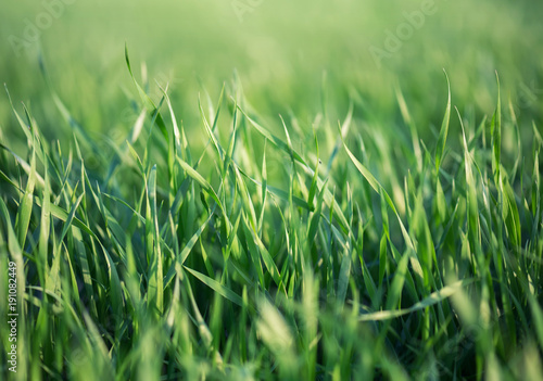 Grass on the field. Agricultural landscape in the summer time