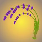 Three lavender branches - 191083287