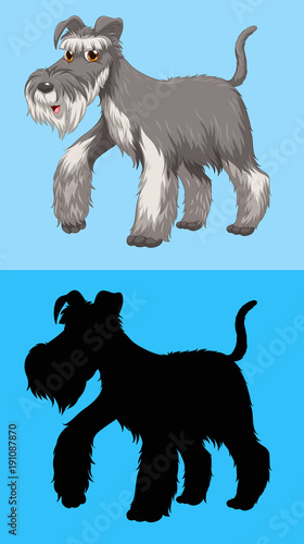 Poster Kids Terrier dog with gray fur