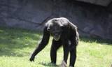 Mono en busca de alimento - 191088043