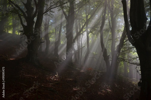 Fotobehang Betoverde Bos Enchanted magical forest with sunrays trough fog