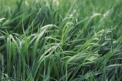Grass on the field as a background. Agricultural composition in the summer time