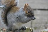 Squirrel - 191103082